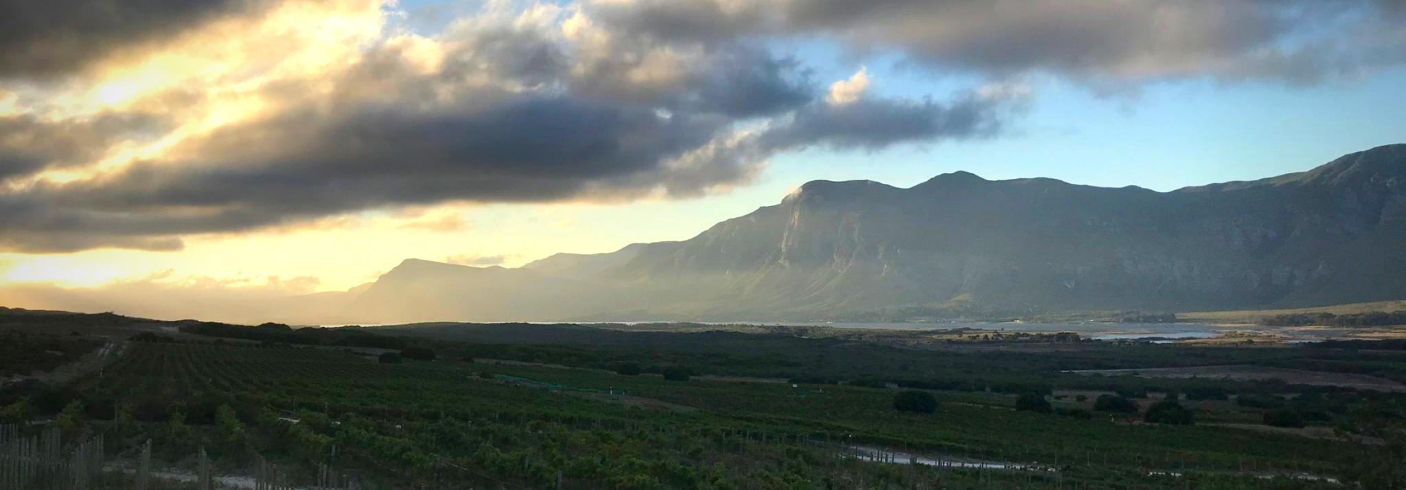 Springfontein-IG-Hermanus-Western-Cape