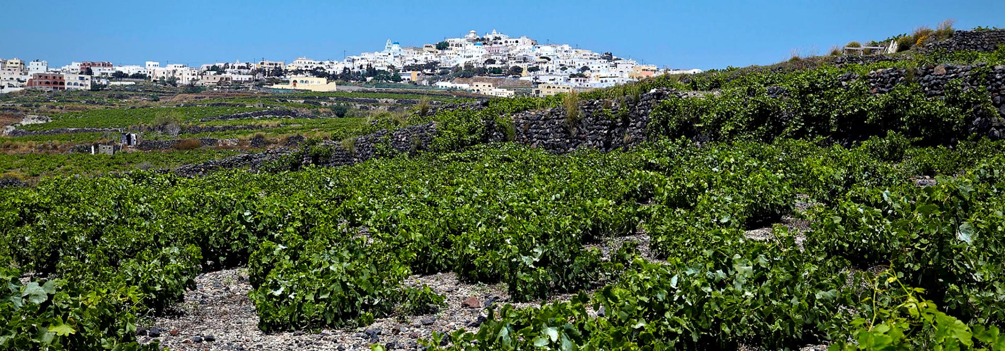 Grèce-Santorin