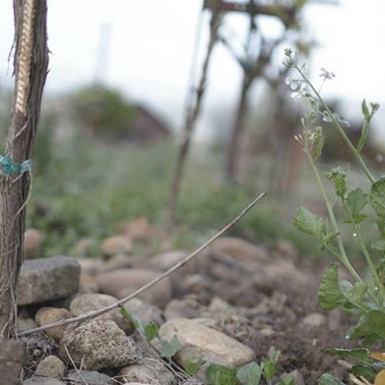 biodiveristy-organic-matthiasson-napa-valley-ava-wine-usa-new-californian-winemaker