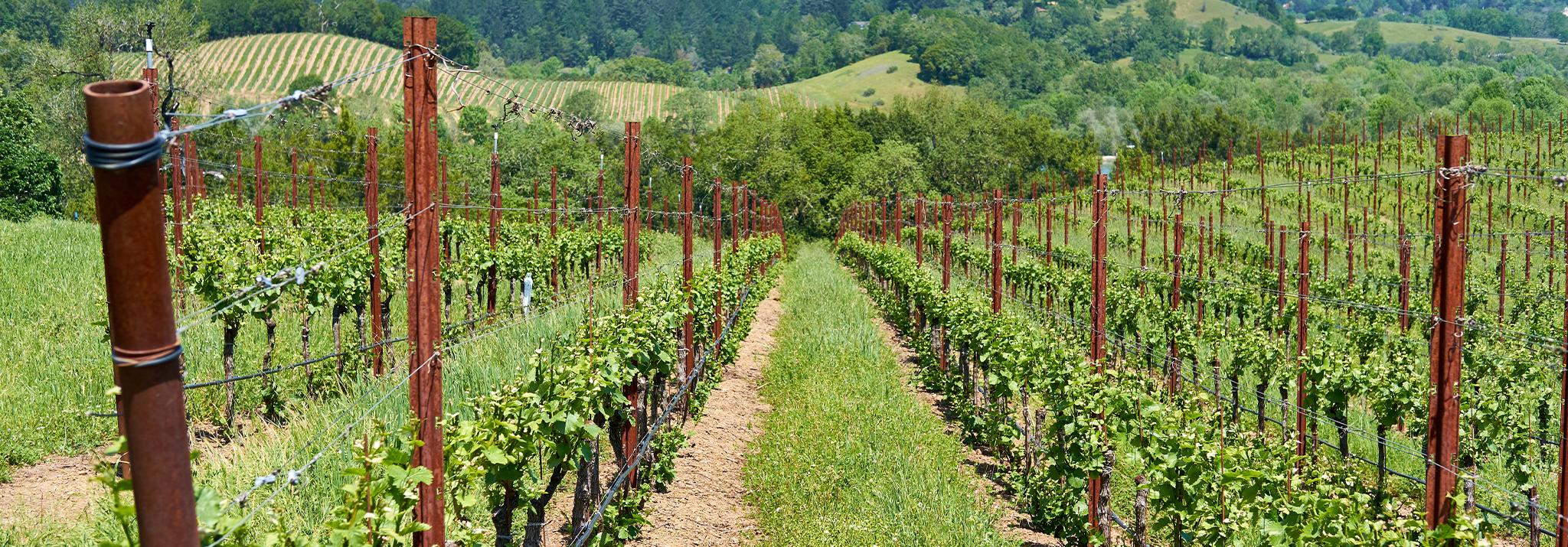 corison-vinyard-napa-valley-cabernet-sauvignon-wines-usa