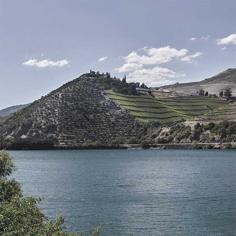 old-vines-quinta-do-crasto-douro-wines-portugal