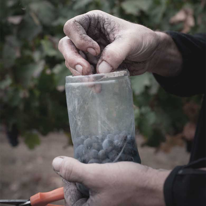 pelter-wines-upper-galilee-vineyard-israel-red-cabernet-sauvignon