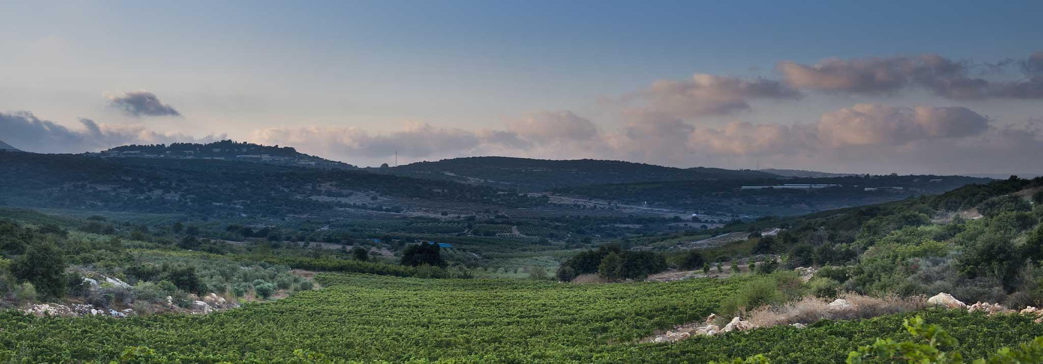 pelter-wines-upper-galilee-vineyard-israel-red-cabernet
