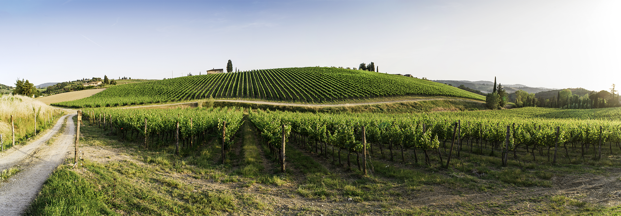 toscane-daviddi-aldimaro-wine