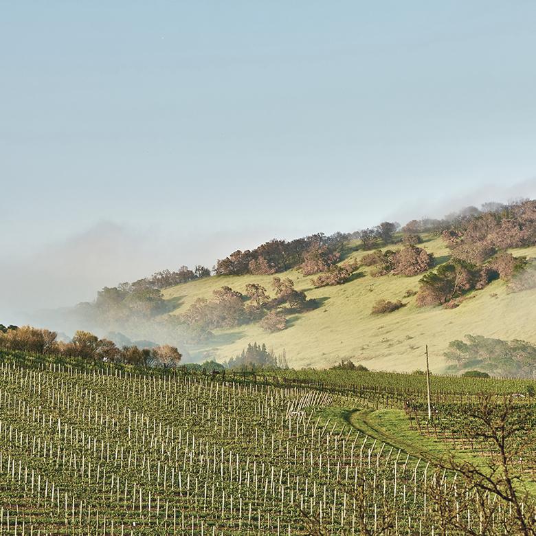 vineyard-lodi-valley-usa-delicato-brazin-old-vines-zinfandel