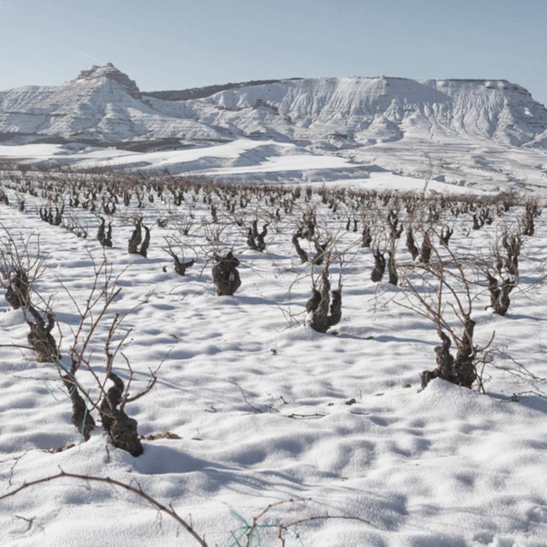 winter-2021-vineyard-old-garnacha-snow-el-escoces-volante-calatayud-spain