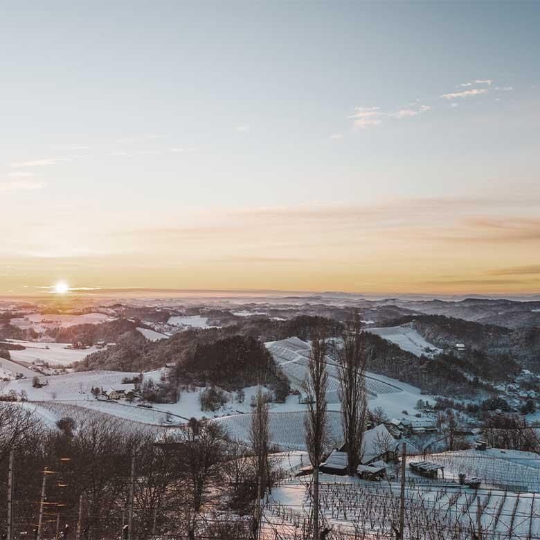 winter-vineyard-austria-langenlois-kamptal-karl-steininger